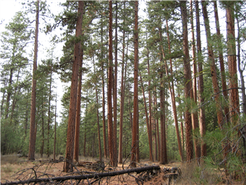 Dry Forest